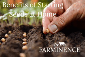 5 Benefits Of Starting Seeds Indoors Farminence