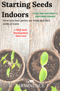 how and when to start seeds indoors