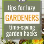 lazy gardening ideas, lazy gardener