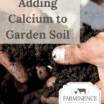 adding calcium to garden soil