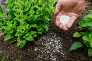 how to use bone meal fertilizer in the garden