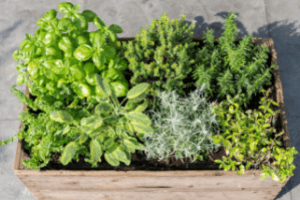which herbs can be planted together in one container, companion planting herbs