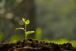 hydroponics or soil, is soil better for gardening than hydroponics