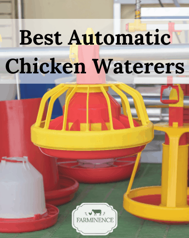 what is the best automatic chicken waterer, best chicken waterers on amazon