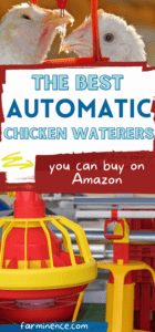 best automatic chicken waterers
