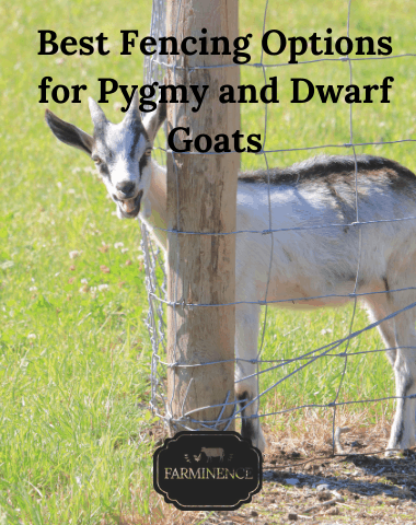 best fencing for small goats, best fencing for pygmy and dwarf goats