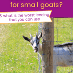 best fencing for pygmy goats, best fence for small goats