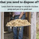 chicken poop fertilizer, chicken manure for garden, what to do with chicken poop