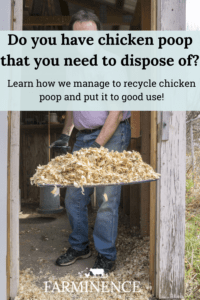 chicken poop fertilizer, chicken manure for garden, what to do with chicken poop