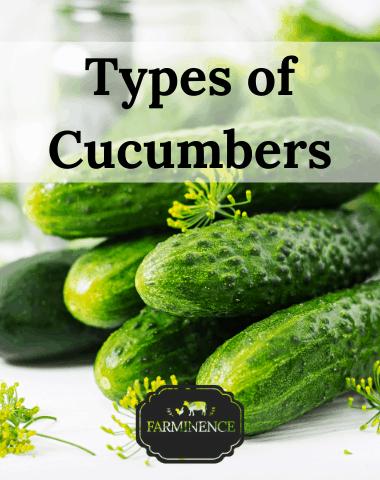 types of cucumbers, cucumber varieties