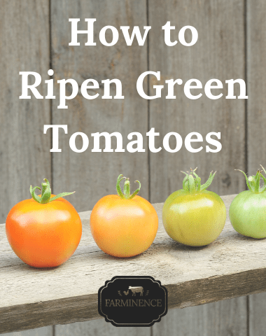 how to ripen green tomatoes, ripening green tomatoes inside