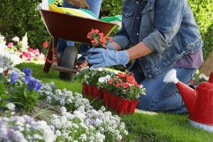 how to garden during pregnancy, gardening during pregnancy, gardening while pregnant