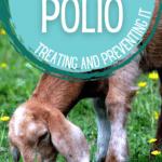 goat polio