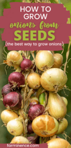 Onions are one of the most popular root vegetables to grow in your garden.  Onions are versatile and can be used in many dishes.  Growing onions from seed can be super simple.  Learn exactly why growing from seeds is better than any method of growing onions.  These tips for growing onions will let you grow onions in containers or pots or even in your garden.