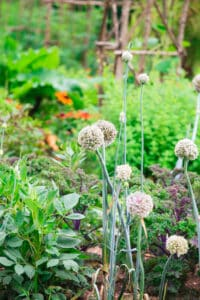 which herbs can be planted together, herbs that grow well together