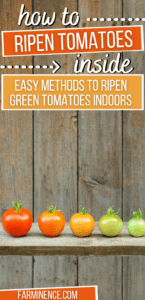 how to make green tomatoes turn red, ripen tomatoes indoors