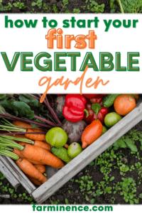 how to start a vegetable garden, starting a vegetable garden, how to start growing vegetables