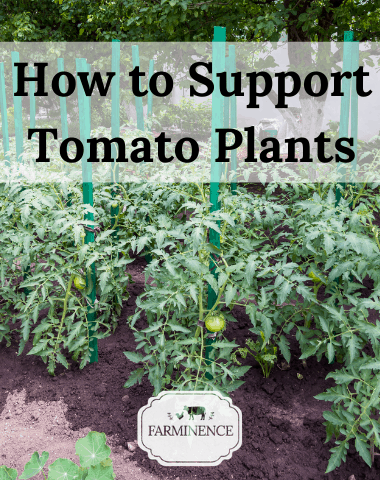 how to support tomato plants, do tomato plants need support