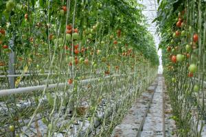 gardening in hydroponics system vs soil