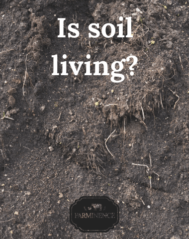 is soil alive, is soil abiotic or biotic