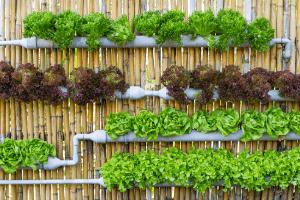 gardening in hydroponics vs soil
