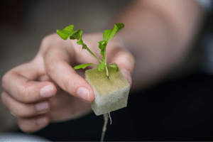growing lettuce in hydroponics systems, is hydroponics better than soil for gardening