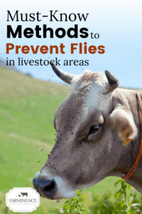 Want to know how to get rid of flies in your barn and from outside spaces? Controlling flies in the chicken coop and outside can seem like a daunting task, but with a few fly prevention tips, you can start controlling flies in the chicken coop and give your animals some relief from flies. Keeping flies off of horses, goats and cows is easier than you may think and starts with some basic daily practices. Start controlling flies today and keep your livestock healthy and happy!