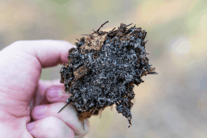 is soil living, microorganisms in the soil