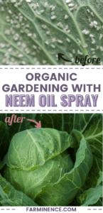 using neem oil in the garden, neem oil spray
