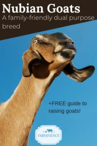 nubian goats, raising nubian goats