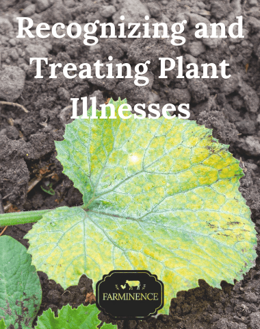 Vegetable Garden Problems: What's wrong with my plant?