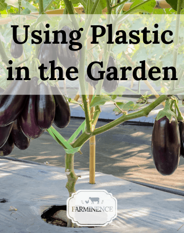 black plastic mulch in the garden, using plastic in the garden, vegetable garden hack