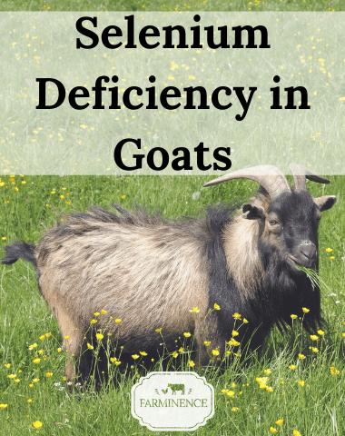 selenium deficiency in goats, treating selenium deficiency goats