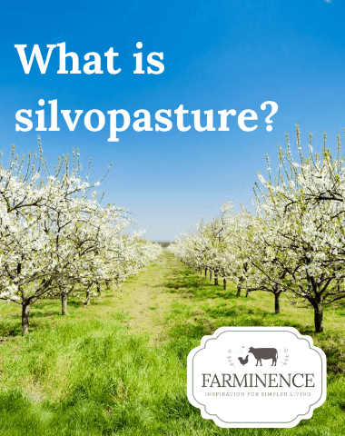 what is silvopasture