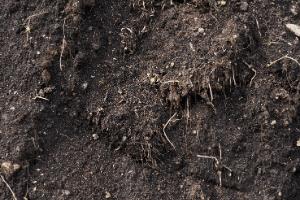 is soil iving, is soil abiotic or biotic