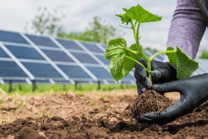 solar power on farm, solar panels on farm