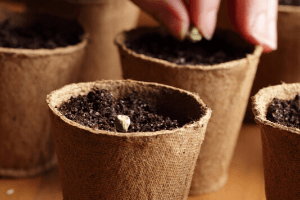 how to start seeds in peat pots