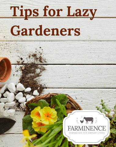 lazy gardening ideas, lazy gardener