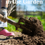 using manure in the garden, manure fertilizer for vegetable garden