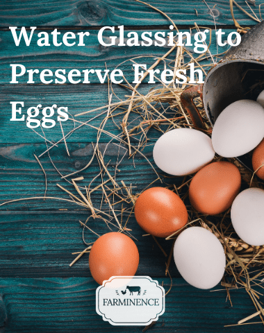 water glassing eggs, preserving fresh eggs