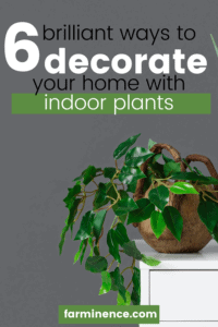 Are you looking for ways to brighten up a living space? Do you have some awkward unfilled spaces that you need to fill in your home? Plants are the perfect way to add some life and color to your home without causing it to look busy. learn which plants are the easiest to grow indoors in this guide.