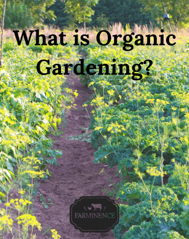 what is organic vegetable gardening