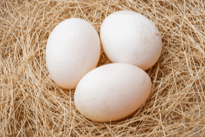 duck eggs, can you eat duck eggs